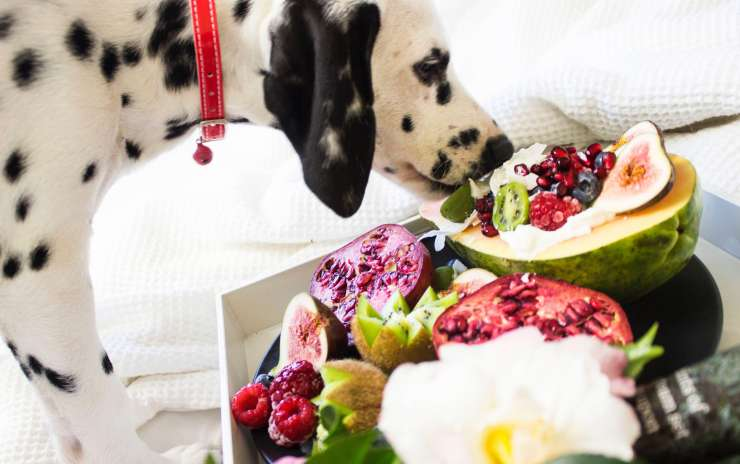 Enhancing Your Dog's Diet