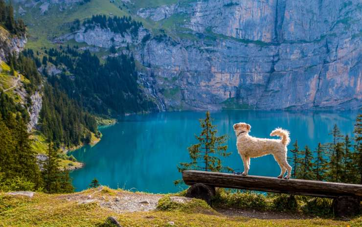 6 Spring Adventures to Do with Your Dog