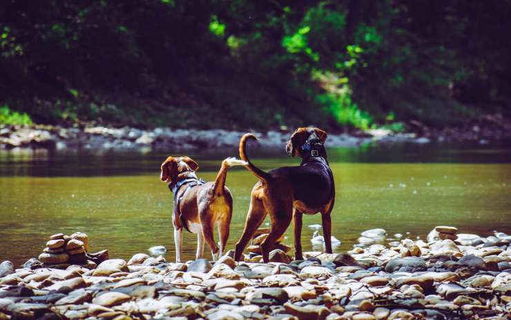 7 Hot Weather Tips to Keep Pets Safe – Hillsborough NJ