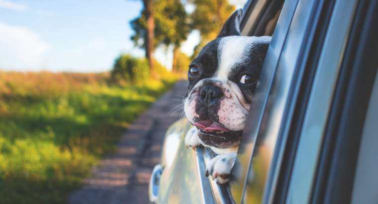 10 Pet Travel Tips Every Pet Owner Should Know