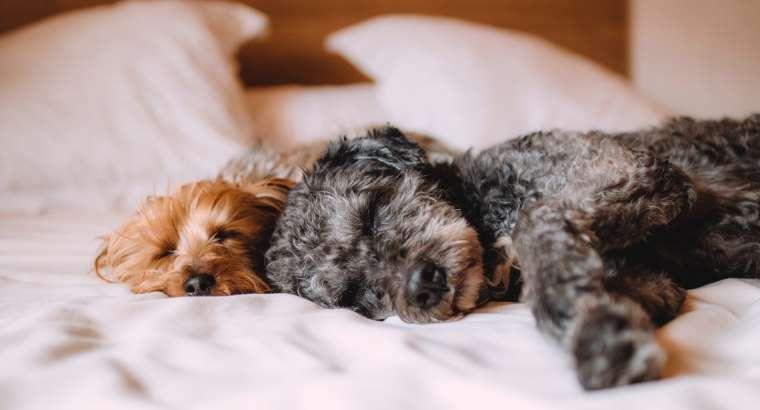 Benefits of Hiring a Professional Dog Walker and Pet Sitter – Hillsborough NJ