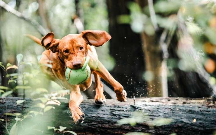 Exercise Benefits for Dogs – Hillsborough NJ