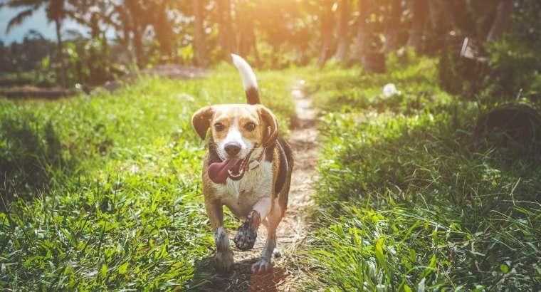 How to Prevent Ticks on Dogs Hillsborough NJ
